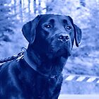 Labrador Retriever by JennaKnight