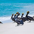 Pelicans On The Beach by Chris Diebold