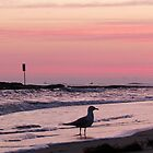 "A sign, a bird, 2 boats ~ & ""pink!"" :D by Donna Keevers Driver"