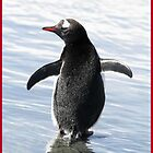 Gentoo Penguin - iPhone by Rob Emery