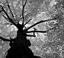 Up a Tree - Infrared by Debbie Pinard