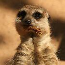 Meerkat by Kezzarama