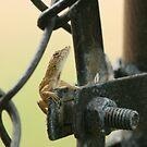 Hawaiian Lizard by Kezzarama