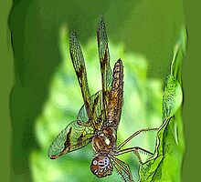 Amberwing (iPhone Case) by William Brennan