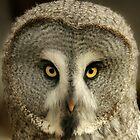 Owl Portrait by Denise McDonald