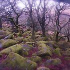 Wistman's Wood - Dartmoor by Denise McDonald