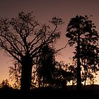 Boab Sunset by Susan Segal