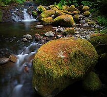 McCord Creek IV by Tula Top