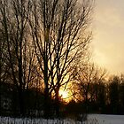 Sunset in tree by LisaBeth