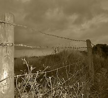 Barbed-wire fence by Ray Smith
