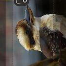 Kookaburra by Trevor Kersley