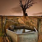 Old Tree by Brian Kerr
