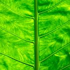 Green leaf by Sami Sarkis
