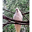 White Cockatoo (iPhone Case) by judygal