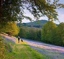 Bev, Sammy and Bluebells by Cliff Williams