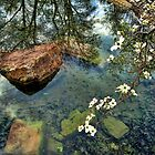 Rocks And Reflections by Carolyn  Fletcher