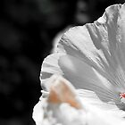 White flower detail by wildrain
