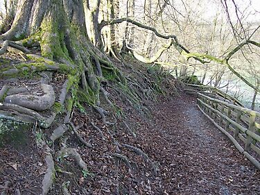 Roots, Calderglen Country Park, East Kilbride by MagsWilliamson