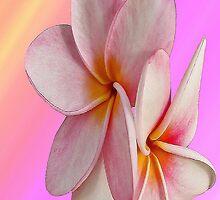 Pink Plumeria - I-phone case by Teresa Zieba