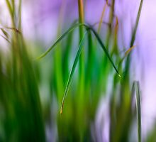 Blades of Grass by hampshirelady