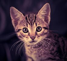 Cute Kitten by cj1970