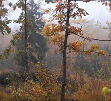 Oak leaves in autumn colors at foggy day by Antanas