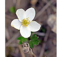 Alaskan Wild Flowers Photographic Print