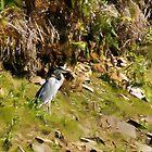 Heron by cj1970
