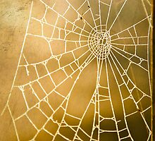 Spider Web by SSDema