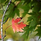 Fall Maple  by bannercgtl10
