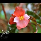 Floral Calendar April by arlain