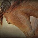 Quarterhorse Beauty by Kristi Johnson