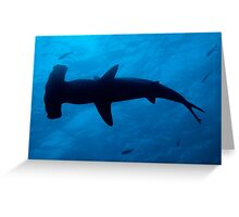 Scalloped Hammerhead shark (Sphyrna lewini), underwater view Greeting Card
