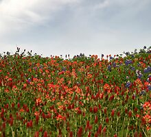 Hilltop Wildflowers by Carolyn  Fletcher
