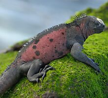 Marine Iguana on rock covered with green seaweed by Sami Sarkis