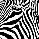 Zebra by Naf4d