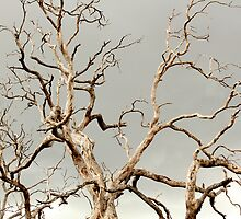 Dead Tree 2 by TeAnne