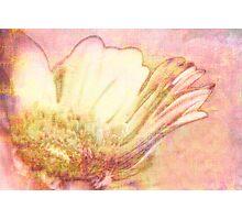 Fleur VIII Photographic Print