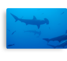 Silhouette of Scalloped Hammerhead sharks (Sphyrna lewini) underwater view Canvas Print