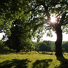 Richmond Park by blodauhyfryd