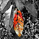 Fall Colors / Sumi-e by Otto Danby II
