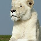 White lioness iPhone case by LisaRoberts