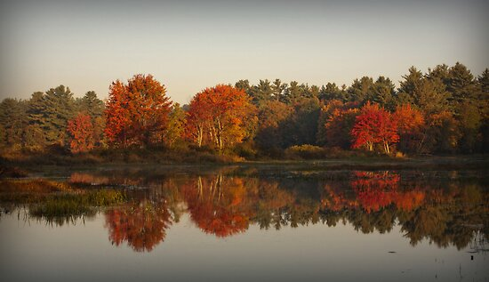 Morning Glow by Diana Nault
