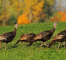 Gobble, Gobble! by Bill McMullen