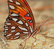 Fritillary III by Mundy Hackett