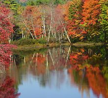 Autumn in Maine by MaryinMaine