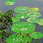 Water Drops on Lilly Pads by Cynthia48