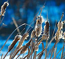 Cattails by Jessica Karran