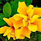Macro Flower, Yellow  by Jessica Karran