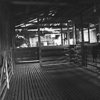 Black River shearing shed by phillip wise